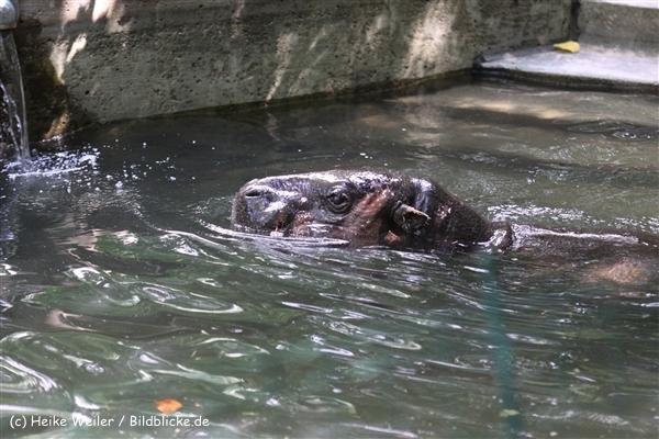 Zoo Krefeld 240710- IMG_8836