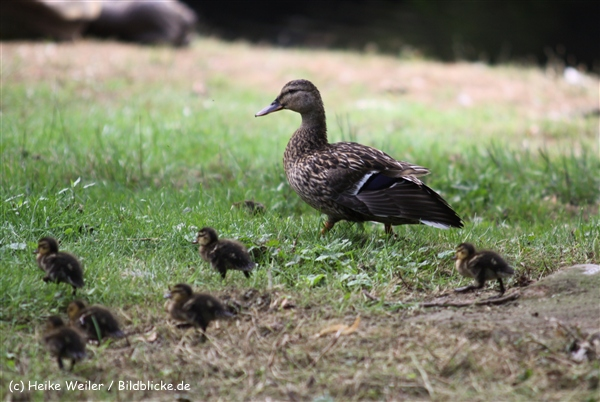 Zoo Krefeld 240710- IMG_8907