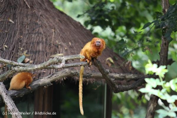 Zoo Krefeld 240710- IMG_8917