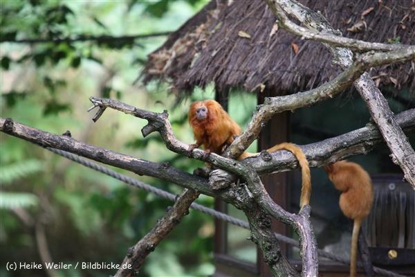 Zoo Krefeld 240710- IMG_8922