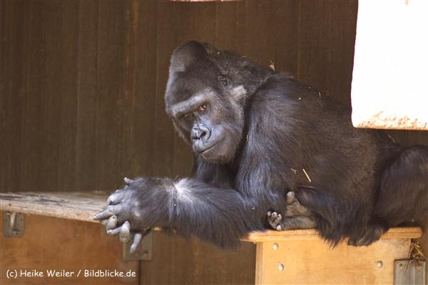 Zoo Krefeld 240710- IMG_8959
