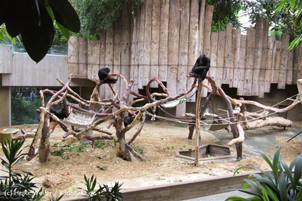 Zoo Krefeld 240710- IMG_9009_1509