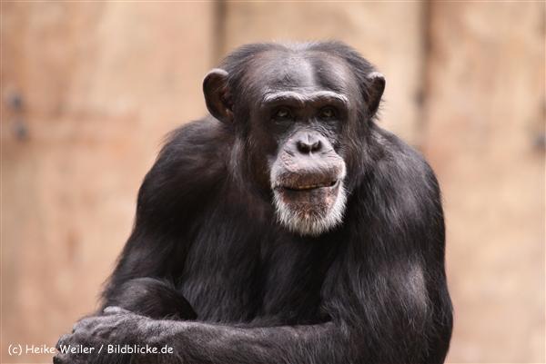 Zoo Krefeld 240710- IMG_9010