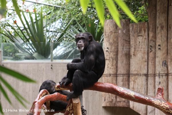 Zoo Krefeld 240710- IMG_9014