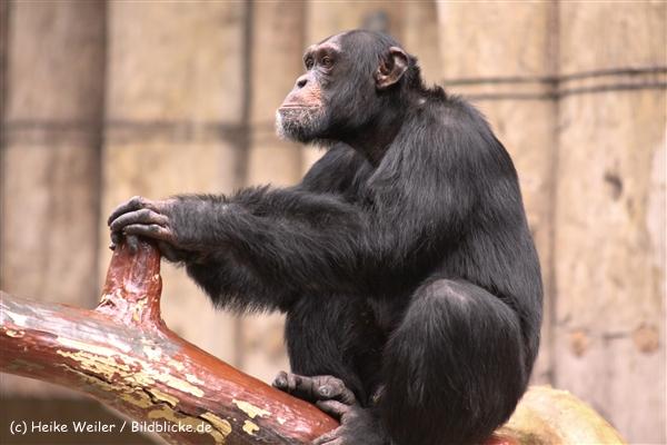 Zoo Krefeld 240710- IMG_9026