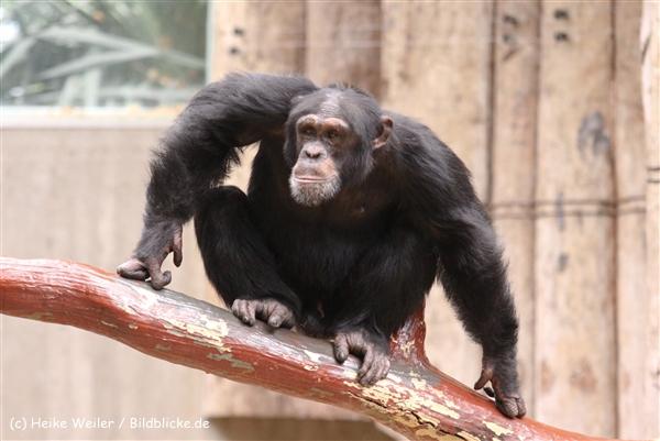 Zoo Krefeld 240710- IMG_9027