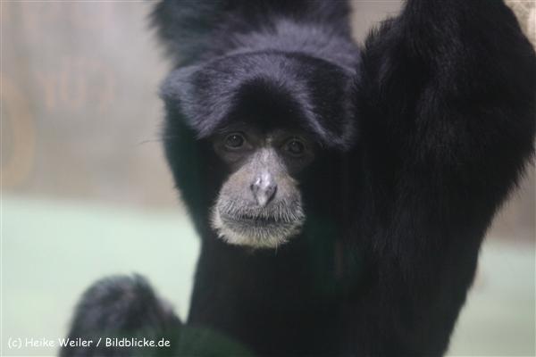 Zoo Krefeld 240710- IMG_9036