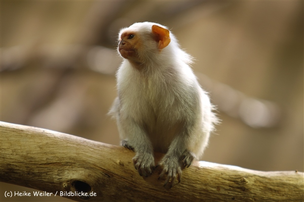 Zoo Krefeld 240710- IMG_9054