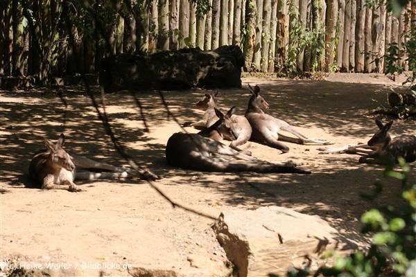Zoo Krefeld 240710- IMG_9100
