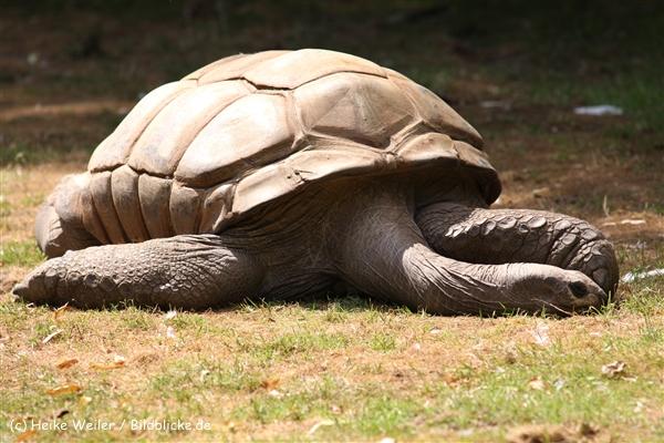 Zoo Krefeld 240710- IMG_9102