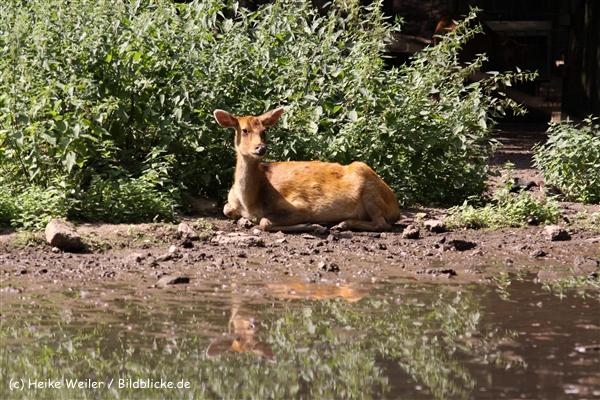Zoo Krefeld 240710- IMG_9118