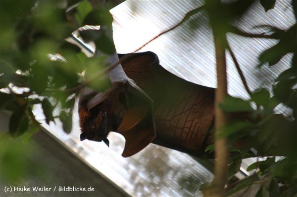 Zoo Krefeld 240710- IMG_9181