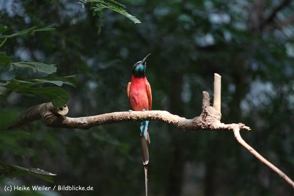 Zoo Krefeld 240710- IMG_9183