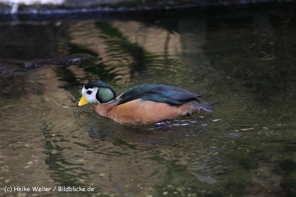 Zoo Krefeld 240710- IMG_9184