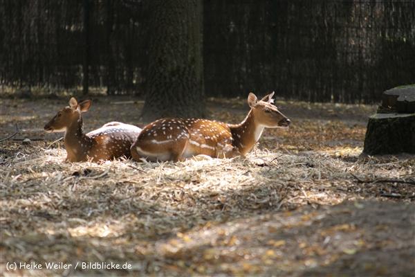 Zoo Krefeld 240710- IMG_9230