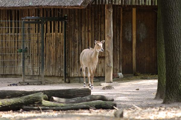 Zoo Krefeld 240710- IMG_9234