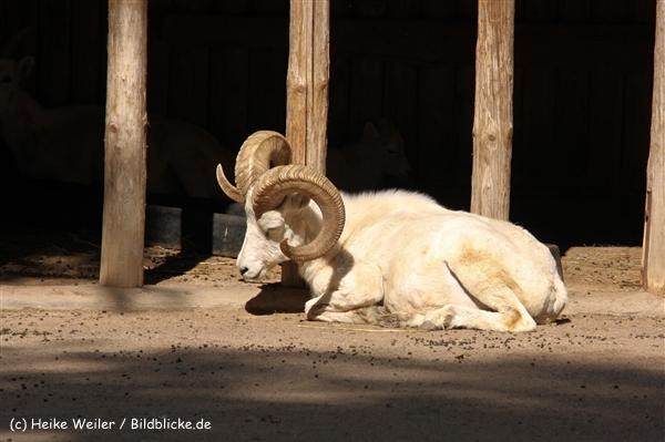 Zoo Krefeld 240710- IMG_9243