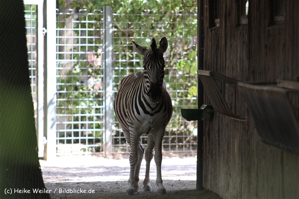 Zoo Krefeld 240710- IMG_9250