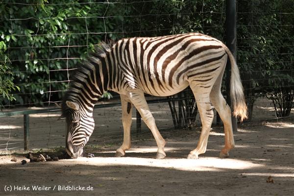 Zoo Krefeld 240710- IMG_9256
