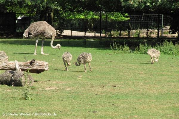 Zoo Krefeld 240710- IMG_9260_1524