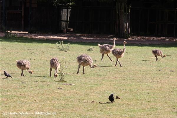 Zoo Krefeld 240710- IMG_9310