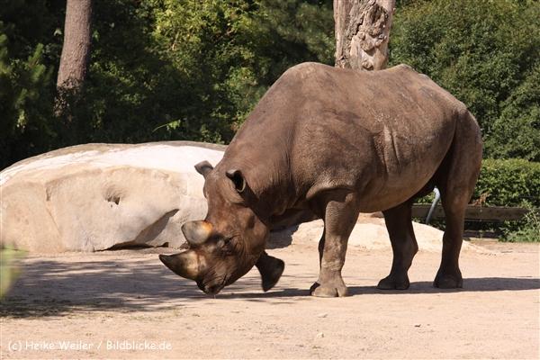 Zoo Krefeld 240710- IMG_9345