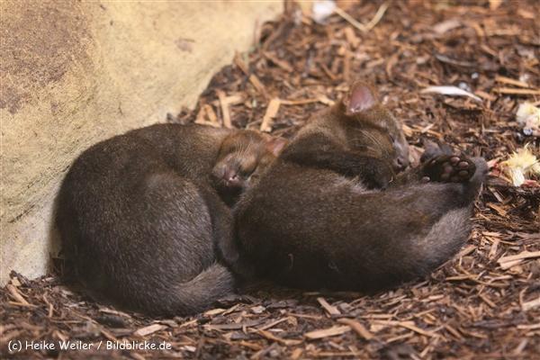 Zoo Krefeld 240710- IMG_9375