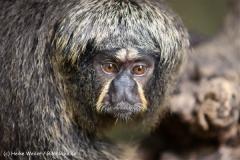 Zoo Krefeld 240710- IMG_8776