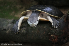 Zoo Krefeld 240710- IMG_8791