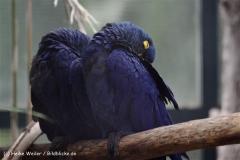 Zoo Krefeld 240710- IMG_8815