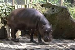 Zoo Krefeld 240710- IMG_8832