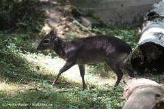Zoo Krefeld 240710- IMG_8863