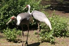 Zoo Krefeld 240710- IMG_8896