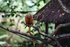 Zoo Krefeld 240710- IMG_8926