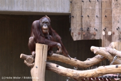 Zoo Krefeld 240710- IMG_8942