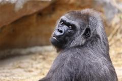 Zoo Krefeld 240710- IMG_8982