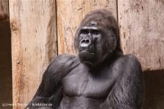 Zoo Krefeld 240710- IMG_8992