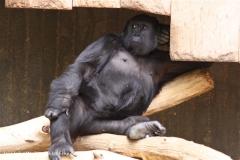 Zoo Krefeld 240710- IMG_9006