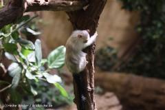 Zoo Krefeld 240710- IMG_9058