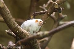 Zoo Krefeld 240710- IMG_9062