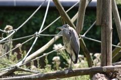 Zoo Krefeld 240710- IMG_9086