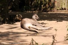 Zoo Krefeld 240710- IMG_9096