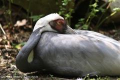 Zoo Krefeld 240710- IMG_9115