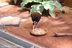 Zoo Krefeld 240710- IMG_9149