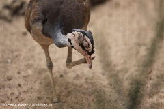 Zoo Krefeld 240710- IMG_9199