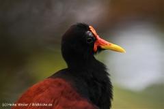 Zoo Krefeld 240710- IMG_9212