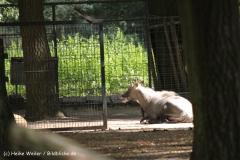 Zoo Krefeld 240710- IMG_9236