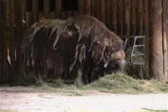 Zoo Krefeld 240710- IMG_9241