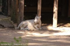 Zoo Krefeld 240710- IMG_9244