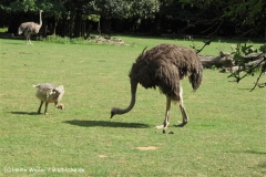 Zoo Krefeld 240710- IMG_9260_1522